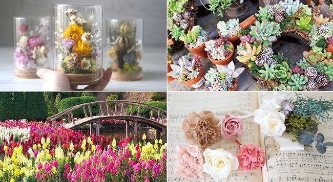 自分のために、花を買おう。「世界らん展2020 ―花と緑の祭典―」の楽しみ方