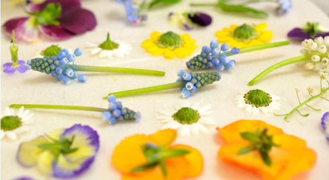 もっときれいにできる「押し花の作り方」のコツを作家さんに教えてもらいました!
