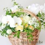 blue blanche