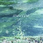 waccca