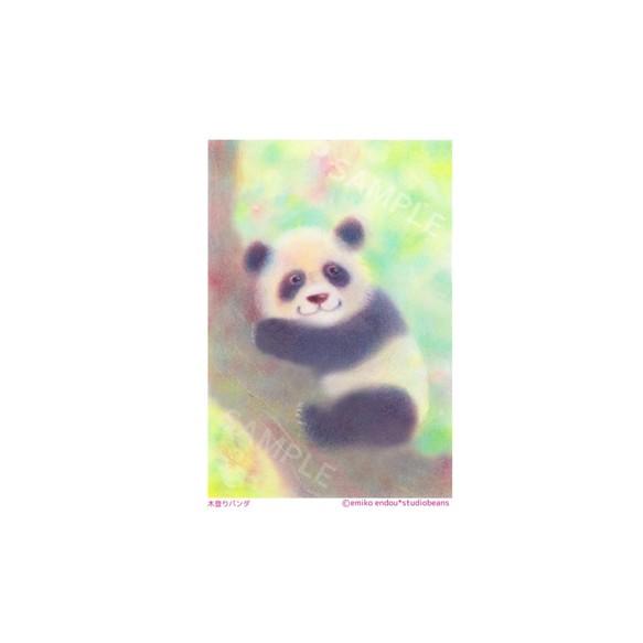 選べるポストカード3枚セットno33 木登りパンダ イラスト スタジオ
