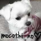 mocothi-no