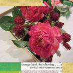 sucreries de fleurs