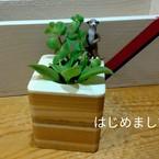 Yashinoki