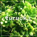 furuoka