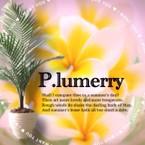 P.lumerry