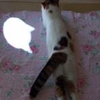Mint-Chii-Leo 3cat