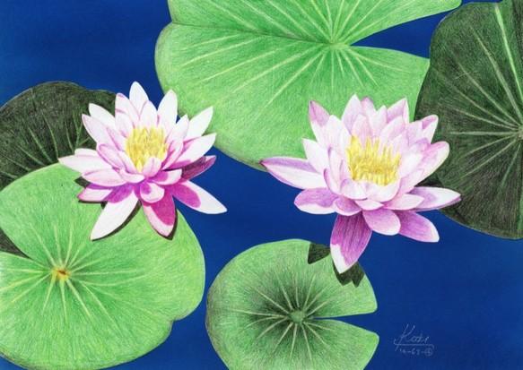 365日の誕生花の絵 6切額付 7月1日10日 絵画 Kooki 通販