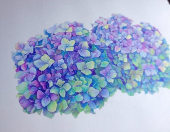 紫陽花 イラスト Ryokos Illustration 通販creemaクリーマ