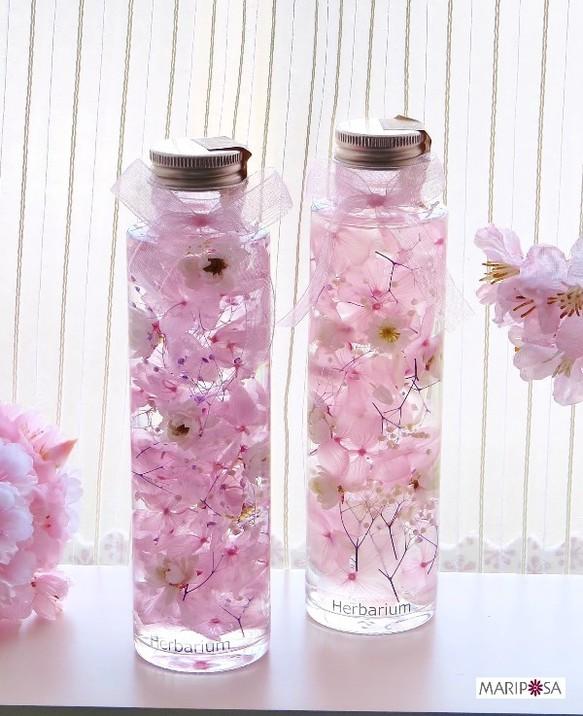 ひめ桜のハーバリウム ~手作り花かんざしのプレミアム桜~(プレゼント用 ラッピングあり)