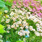 unjour de  fleur