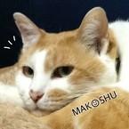 MAKOSHU