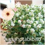 hananotabibito(花乃旅人)
