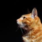 Wait. Cat.
