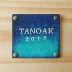 Tanoak