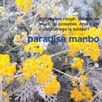paradise manbo