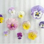 菜々子*flower