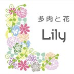 Lily 多肉と花