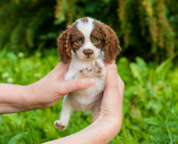 Image result for 犬 English Springer Spaniel 可愛らしい