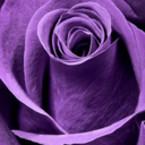 Bouquet Bijou**