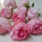 La Vie en Fleurs*