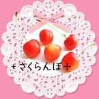 +sakuranbo+