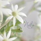 Nel's