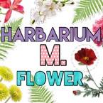 HARBARIUM.M.FLOWER
