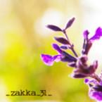 _zakka_31_