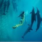 OCEANgallery