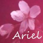 Ariel・アリエル
