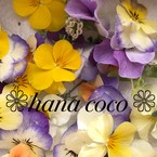 ❁hana coco ❁
