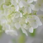 Hana's Garden