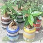 *PlantsFactory*