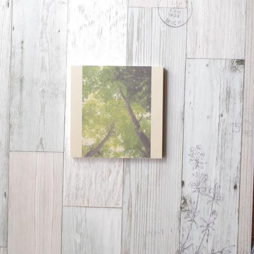 [再販] 壁であそぼう ☆ 優しい樹々に 見守られて アートパネル 写真