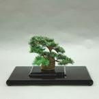 盆栽水引アート365