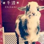 千波-Chinami-