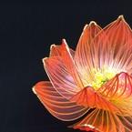 Flower Phoebe