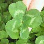 four*leaf