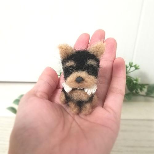 ヨーキー 子犬