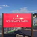 ichikawa farm