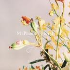m-phoenix-floral