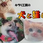 犬と猫と。