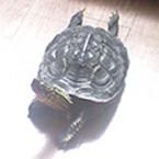 turtle's nest