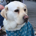 徳島の盲導犬 Support Shop