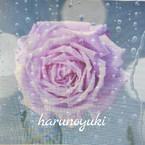harunoyuki