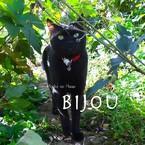 星花Bijou