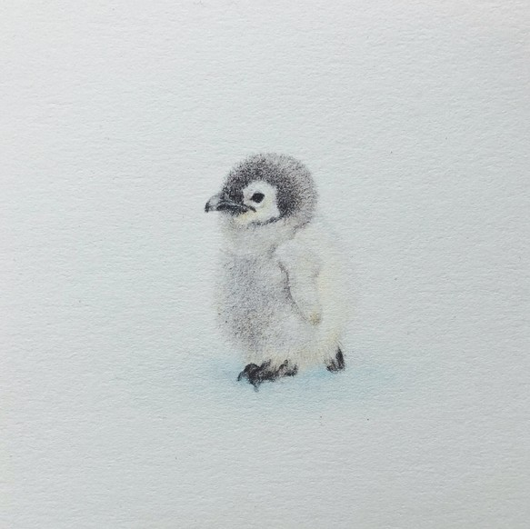 Animal Portrait ペンギンの赤ちゃん 原画 イラスト Atelier Les