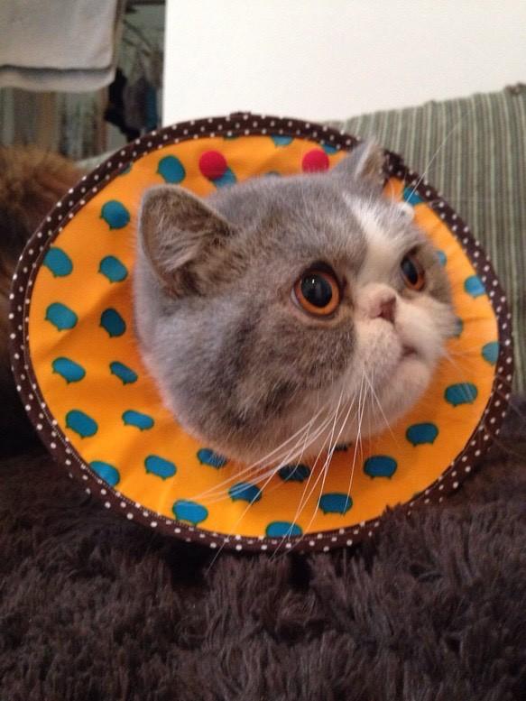 猫 エリザベス カラー 手作り