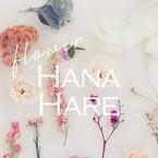 HANA HARE